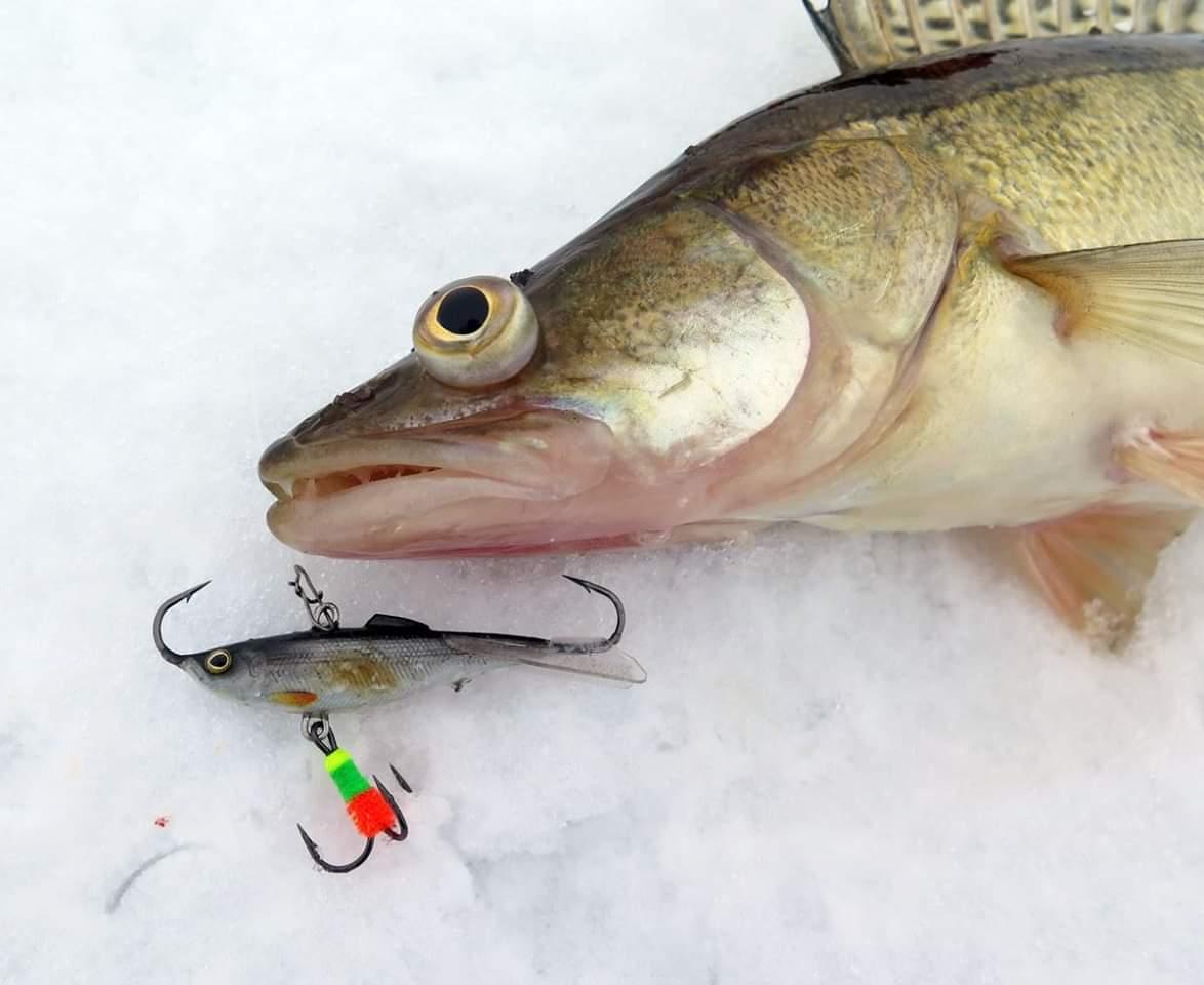 Ловля окуня на блесну зимой – масса эмоций и хороший улов