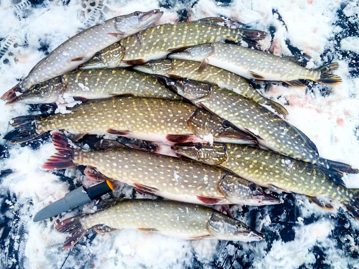 Рыбалка зимой в пермском крае — места и советы