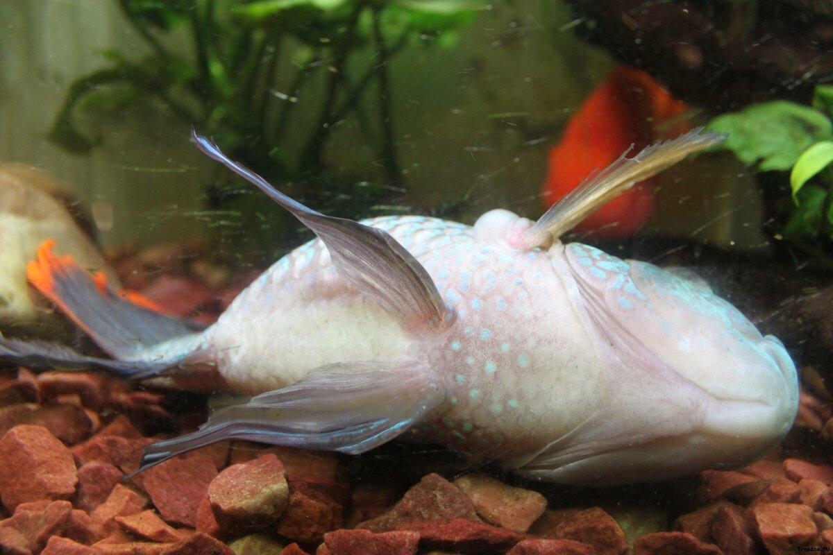 Как рыбы спят? особенности рыбьего сна