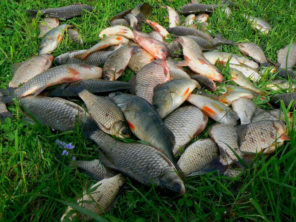 Ловля рыбы на реке кубани