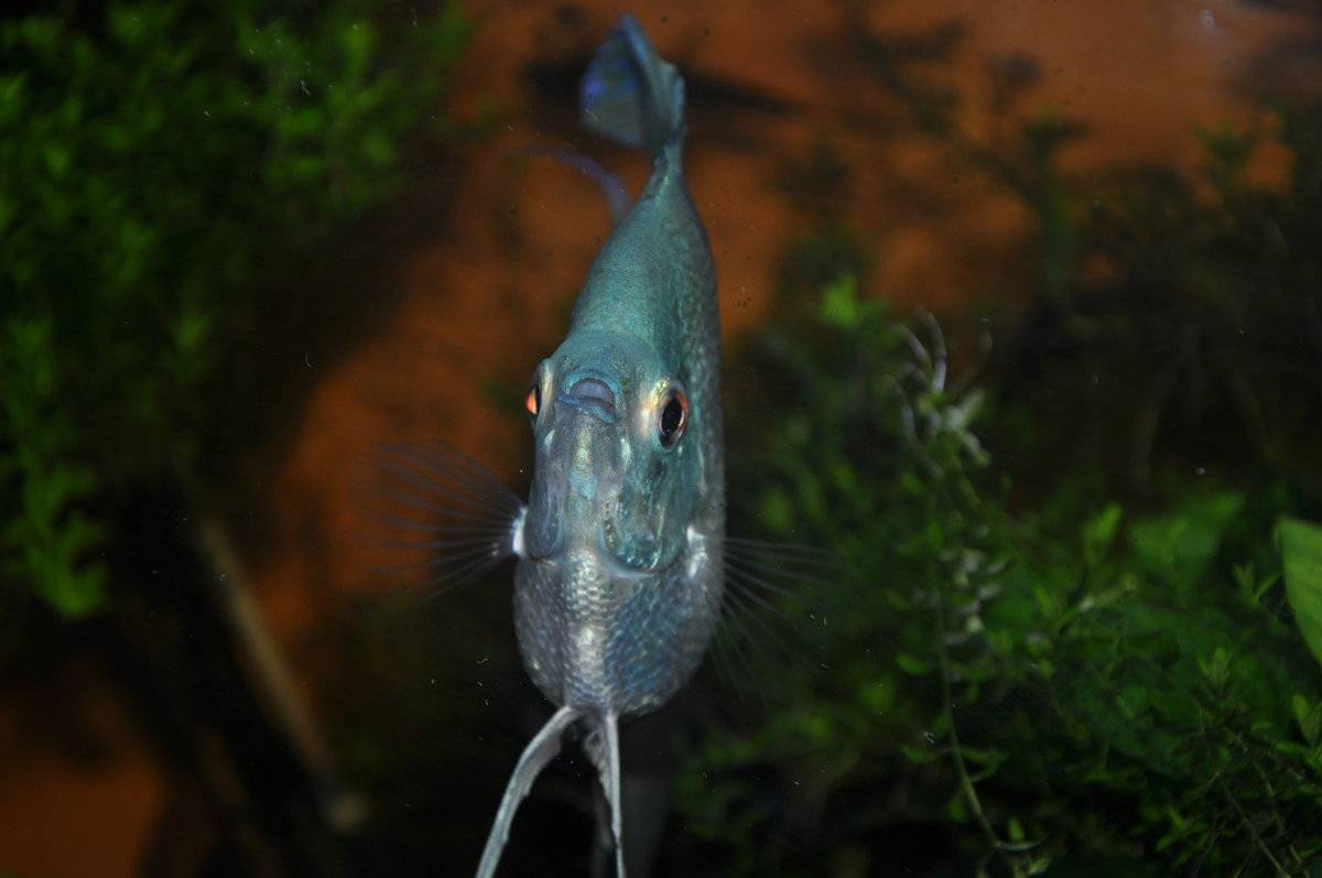 Должен ли фильтр в аквариуме работать постоянно и можно ли отключать на ночь?