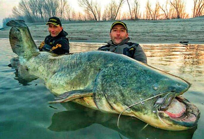 Самая большая рыба в мире: топ-10