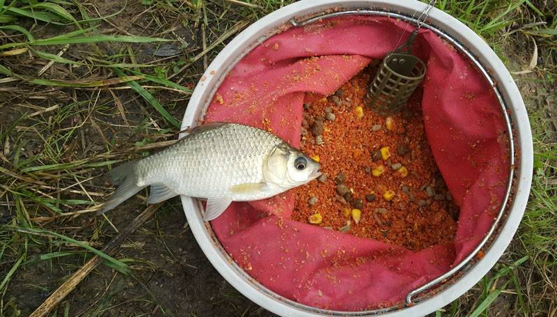 Снасти для ловли плотвы по открытой воде в пруду и реке