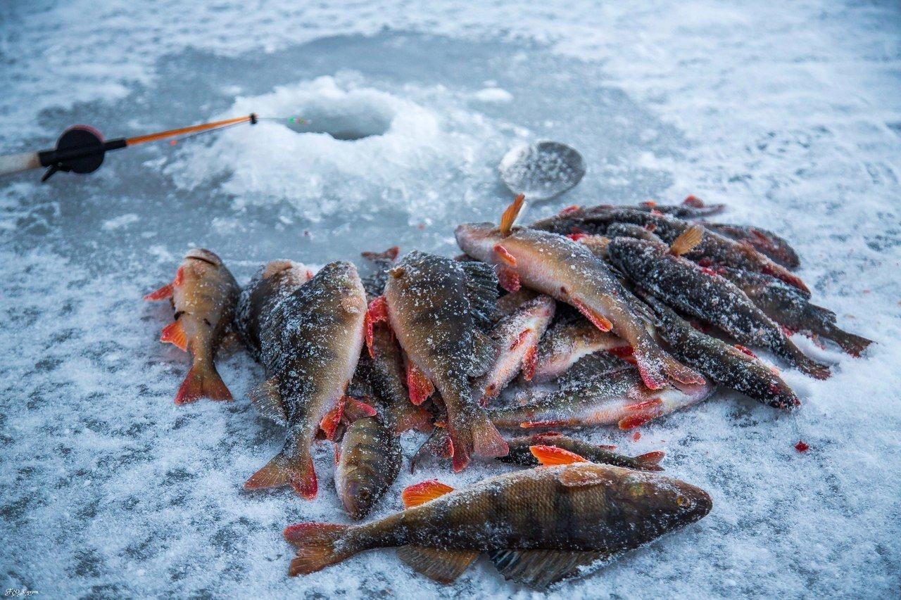 Где ловить рыбу в пермском крае