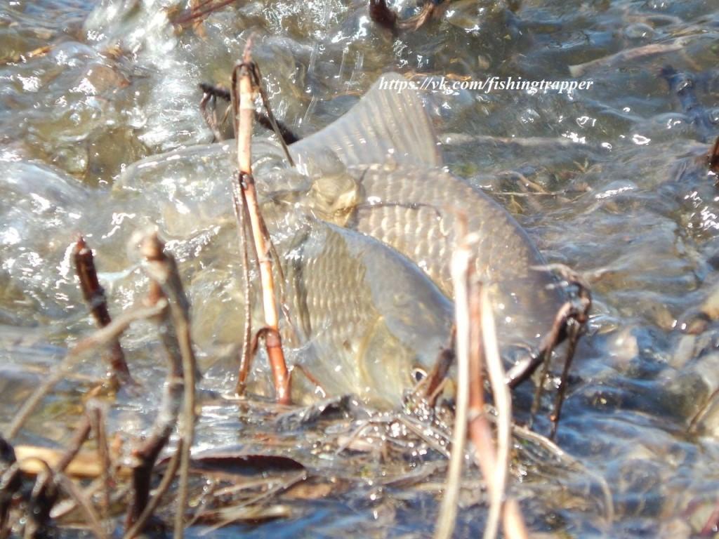 Выбор глубины для ловли карася на поплавочную удочку